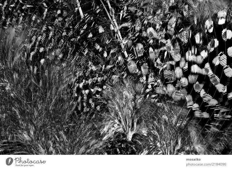 schwarze Federn Natur schön weiß Tier Lifestyle natürlich Stil Mode grau Vogel Design Dekoration & Verzierung elegant Beautyfotografie