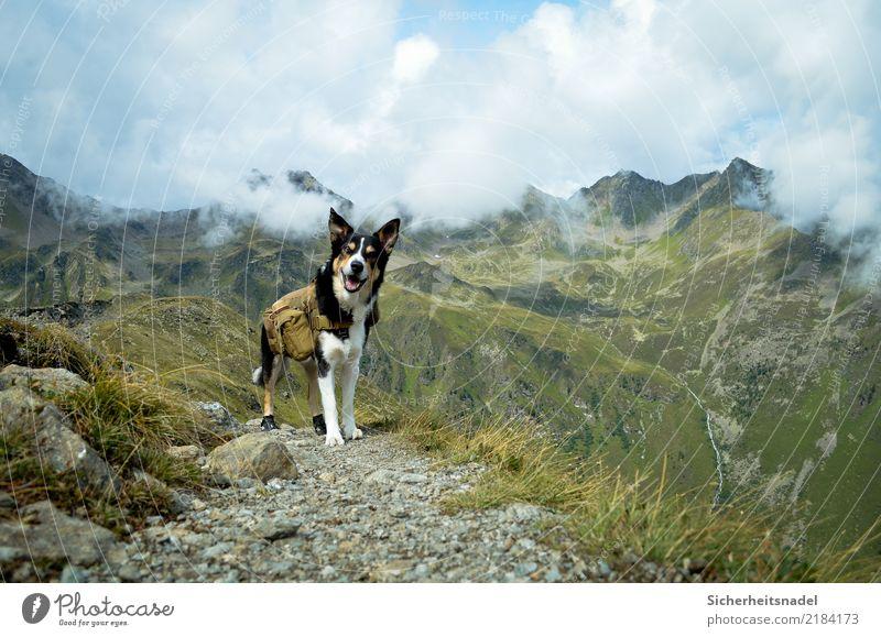 Bergsteiger Olli wandern Bergsteigen Klettern Ferien & Urlaub & Reisen Abenteuer Berge u. Gebirge Natur Wolken Sommer Schönes Wetter Hügel Felsen Alpen