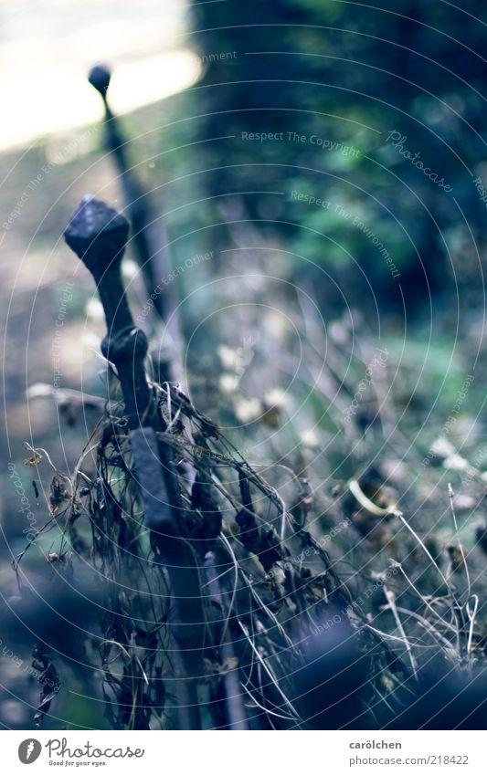 Verfall grün blau grau verfallen Rost Zaun Friedhof Metallzaun Zaunpfahl Schmiedeeisen