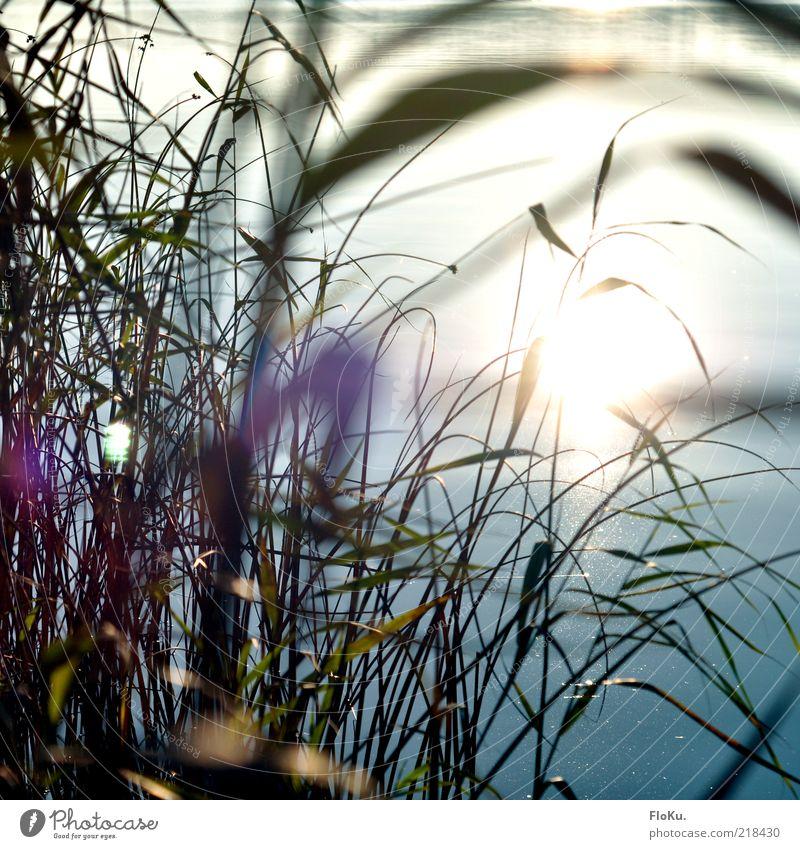 Let the sunshine in Umwelt Natur Pflanze Wasser Sonne Sonnenlicht Herbst Schönes Wetter Gras Blatt Küste Seeufer Flussufer Teich Bach glänzend hell Geborgenheit