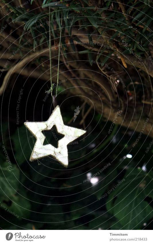 Einsames güldenes Sternlein Weihnachten & Advent Pflanze Blatt hell gold glänzend Dekoration & Verzierung ästhetisch einzeln Stern (Symbol) Zeichen hängen Klischee Zweige u. Äste Weihnachtsstern Tannenzweig