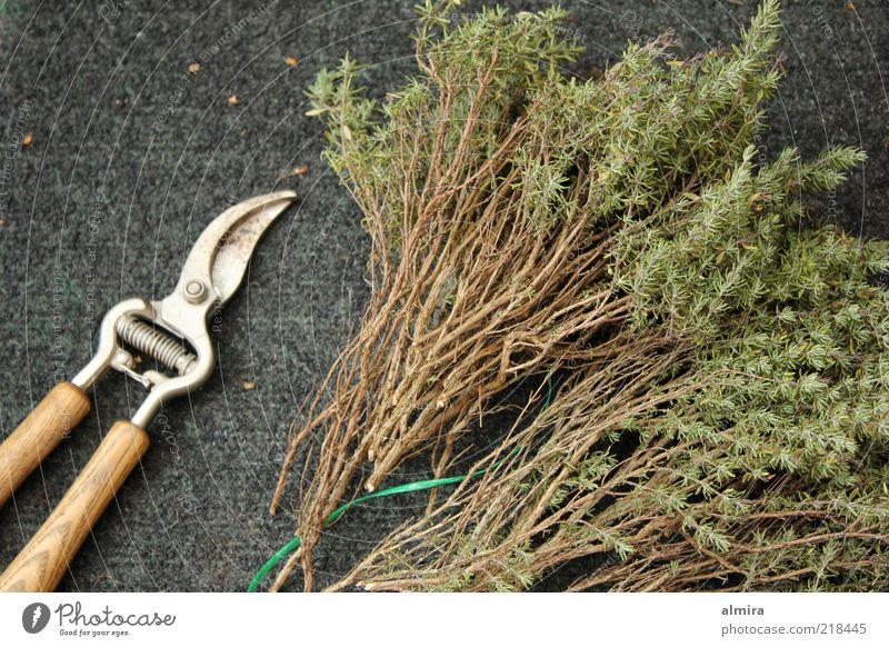 Duftbündel grün grau braun Sträucher Kräuter & Gewürze trocken Gartenarbeit Schere Nutzpflanze Arbeit & Erwerbstätigkeit Gartengeräte