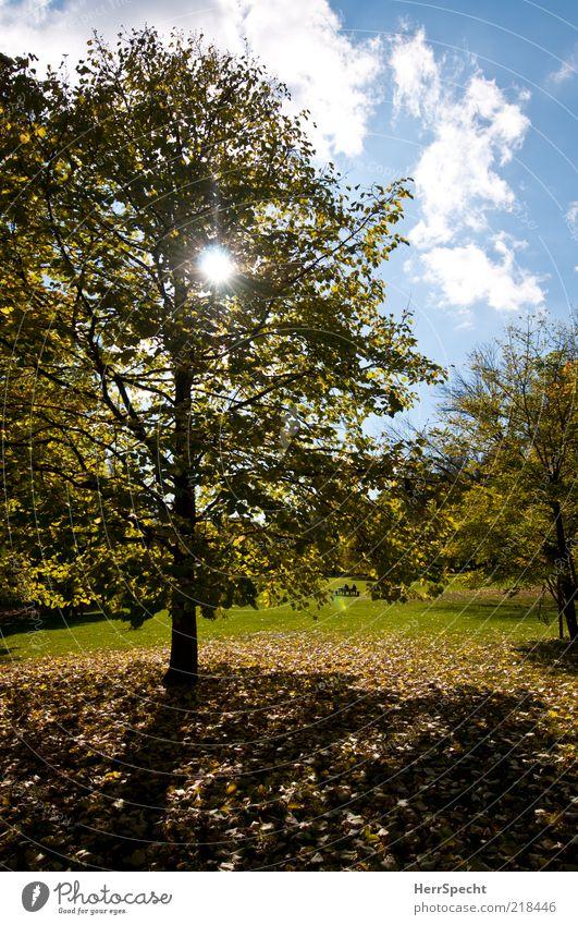 Gestern im Prater Natur Landschaft Himmel Wolken Sonne Herbst Schönes Wetter Baum Gras Blatt Park Wiese blau gelb grün Herbstlaub herbstlich Herbstlandschaft