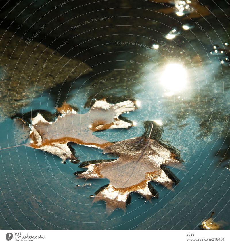 Doppel Wasser schön Sonne Blatt Herbst braun nass paarweise Boden Klima natürlich Kopfsteinpflaster Pfütze Eiche Herbstlaub Im Wasser treiben