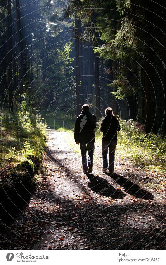Wanderer im Herbstwald ruhig Mensch maskulin Junge Frau Jugendliche Junger Mann 2 Landschaft Sonnenlicht gehen wandern Zusammensein natürlich Gefühle Stimmung