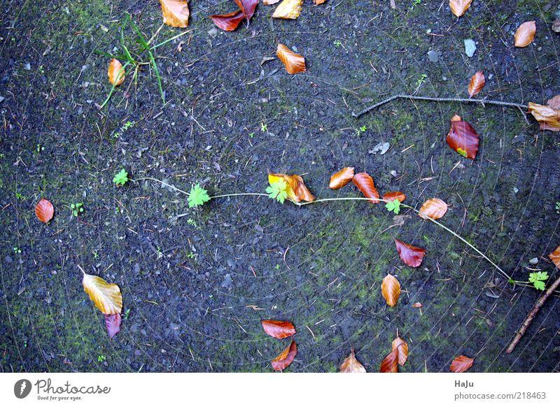 Ranke im Wald Natur ruhig Blatt Leben Herbst Gefühle Stil Gras Stimmung dreckig Erde Boden Vergänglichkeit einzigartig geheimnisvoll Herbstlaub