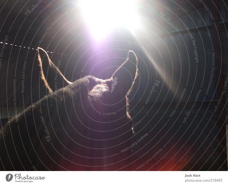 Tier Pferd Macht geheimnisvoll Gelassenheit Leidenschaft Nutztier abstrakt Kontrast Sonnenlicht Tierliebe Bildsprache
