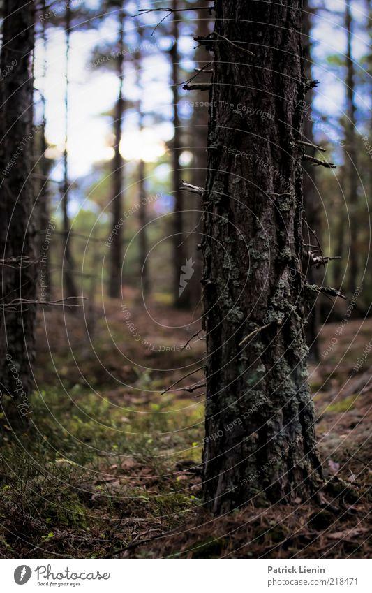ragged wood Umwelt Natur Landschaft Pflanze Urelemente Erde Herbst Wetter Regen Baum Wildpflanze Wald Hügel genießen schön weich Stimmung Baumstamm Baumrinde