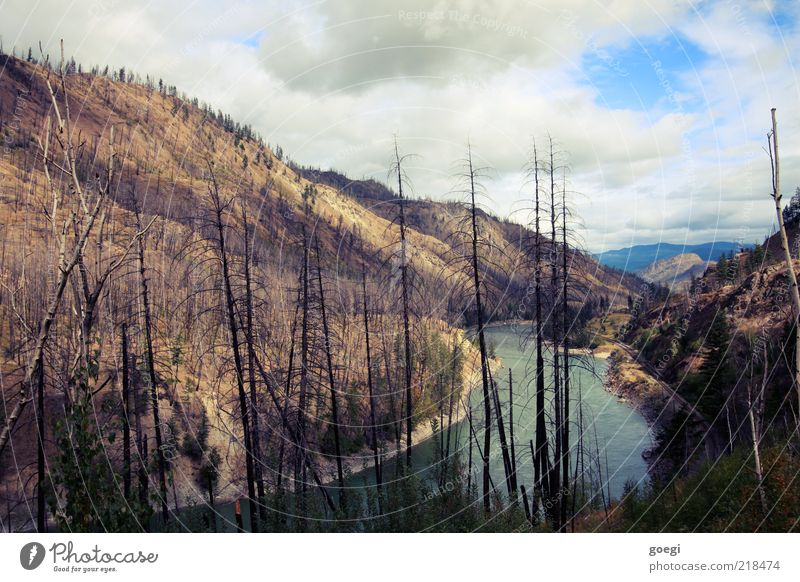 after the firestorm Umwelt Natur Landschaft Urelemente Erde Himmel Wolken Wärme Dürre Baum Wald Hügel Flussufer North Thompson River Kanada kaputt Desaster