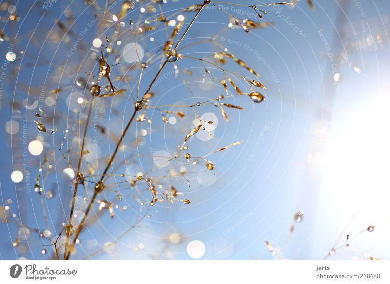 blue Sunday Natur Himmel Sonne Pflanze Herbst Gras glänzend Wetter Wassertropfen frisch natürlich Schönes Wetter Reflexion & Spiegelung Textfreiraum Glanzlicht Blendenfleck