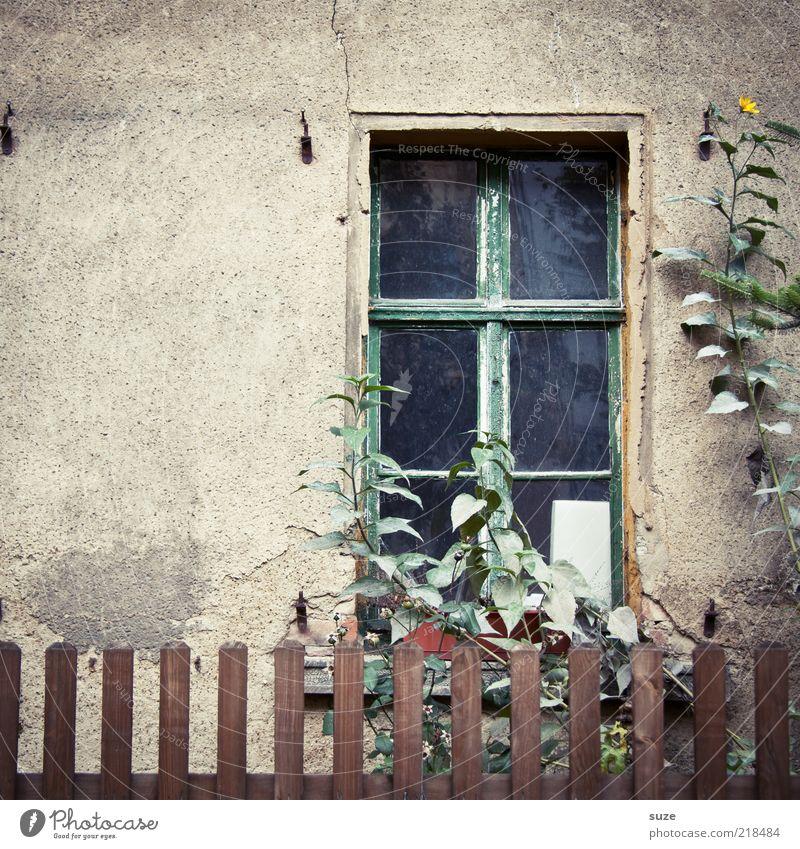 Fenster Häusliches Leben Garten Pflanze Blume Mauer Wand Fassade alt trist trocken braun Trauer Einsamkeit Verfall Vergangenheit Vergänglichkeit Wachstum Zeit