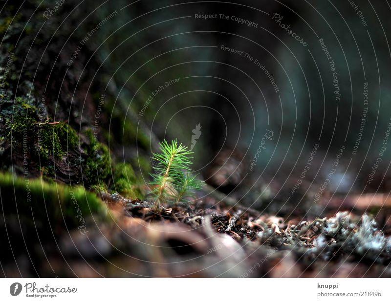 neues Leben am Waldboden Umwelt Natur Pflanze Erde Sonnenlicht Herbst Baum Wachstum frisch ruhig grün braun Baumstamm Farbfoto Außenaufnahme Nahaufnahme