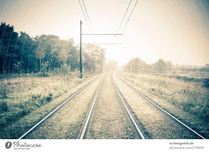 Gut geschient Umwelt Natur Landschaft Pflanze Herbst Winter Nebel Baum Gras Verkehr Verkehrswege Bahnfahren Wege & Pfade Schienenverkehr Gleise Schienennetz