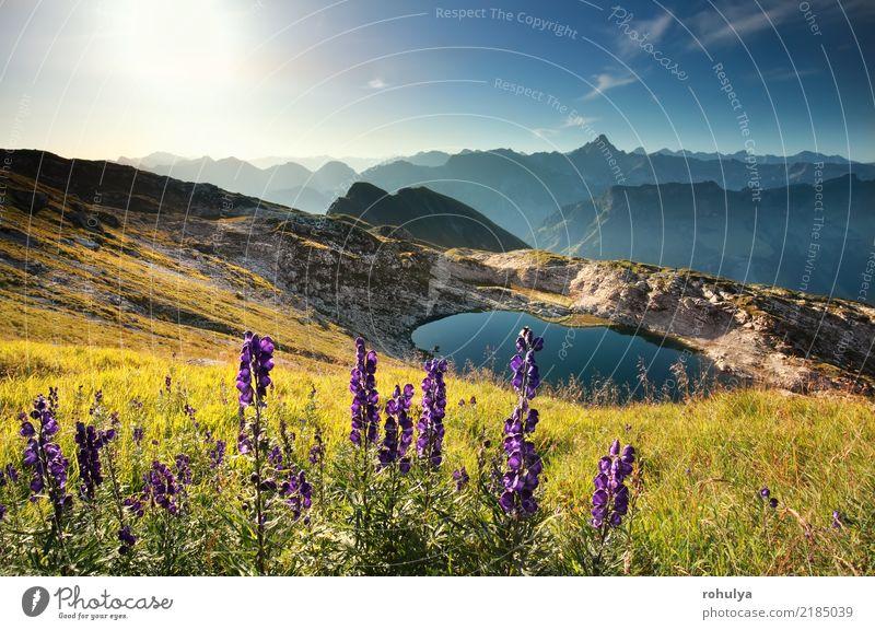 Wildblumen am Berg in der Nähe von Alpensee, Allgäuer Alpen, Deutschland Ferien & Urlaub & Reisen Sommer Sonne Berge u. Gebirge wandern Natur Landschaft Himmel