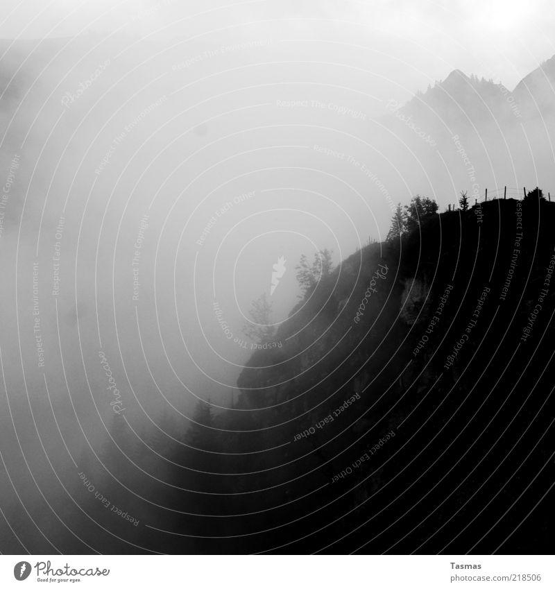 Sennentuntschi Landschaft Urelemente Luft Wetter Baum Felsen Alpen Gipfel Natur Schwarzweißfoto Außenaufnahme Menschenleer Schatten Silhouette Bergwald Dunst