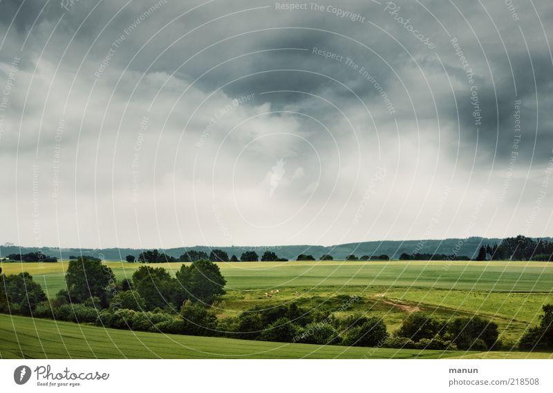 Schwäbische Alb Ferne Umwelt Natur Landschaft Wolken Sommer Wetter Wiese Feld Wald Hügel Ostalbkreis natürlich schön Heimweh Fernweh einzigartig Perspektive