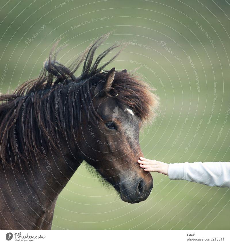 i touch Natur grün schön Hand Tier Gefühle braun Freundschaft natürlich Arme Wildtier niedlich Pferd berühren Freundlichkeit Neugier