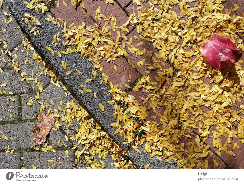Blättermix am Straßenrand... Natur Pflanze rot Blatt gelb Herbst grau Wege & Pfade Stimmung Umwelt ästhetisch Wandel & Veränderung liegen Vergänglichkeit