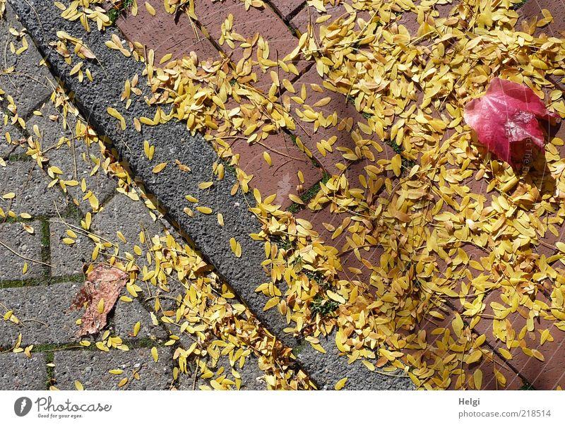 Blättermix am Straßenrand... Natur Pflanze rot Blatt gelb Straße Herbst grau Wege & Pfade Stimmung Umwelt ästhetisch Wandel & Veränderung liegen Vergänglichkeit natürlich