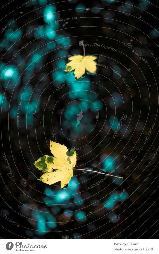 two leaves left Natur Wasser schön Pflanze Blatt gelb dunkel Herbst See Stimmung Umwelt ästhetisch Schwimmen & Baden Jahreszeiten Teich