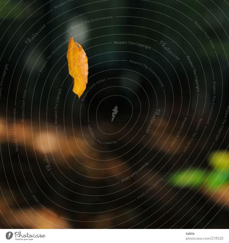 Am Seidenen Faden Natur Baum grün Pflanze ruhig Blatt schwarz dunkel Herbst braun Umwelt Ende Wandel & Veränderung Vergänglichkeit leuchten trocken
