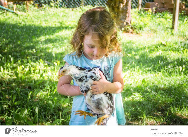 Ein kleines Mädchen hält ein junges Huhn. Kind Landwirtschaft Forstwirtschaft Mensch Natur Tier Vogel tragen Bauernhof Geflügel Geografie Hahn Haushuhn Tierlieb