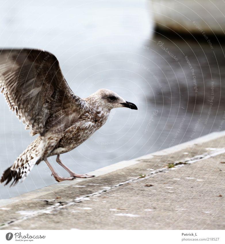 Vogelperspektive Tier Wildtier frei Möwe Schnabel Feder hell nordisch Ostsee Außenaufnahme Morgen Kontrast Bewegungsunschärfe Schwache Tiefenschärfe