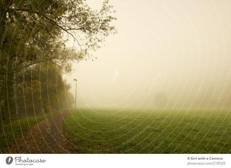 in front of nothingness Umwelt Natur Herbst schlechtes Wetter Nebel Baum Gras Wald Wege & Pfade authentisch außergewöhnlich gruselig schön grün weiß ruhig trist