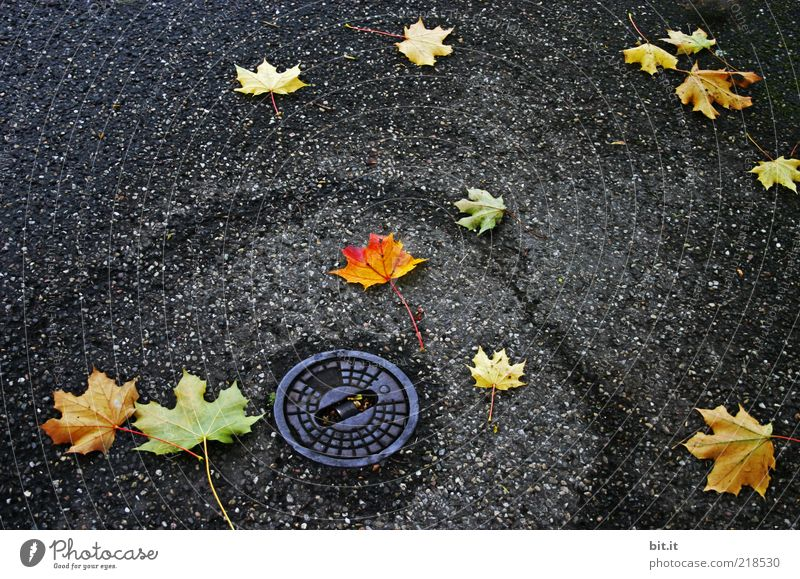 Kreisel Blatt Herbst Straße dunkel Wege & Pfade Regen Wetter nass Platz liegen trist rund Vergänglichkeit fallen Asphalt unten