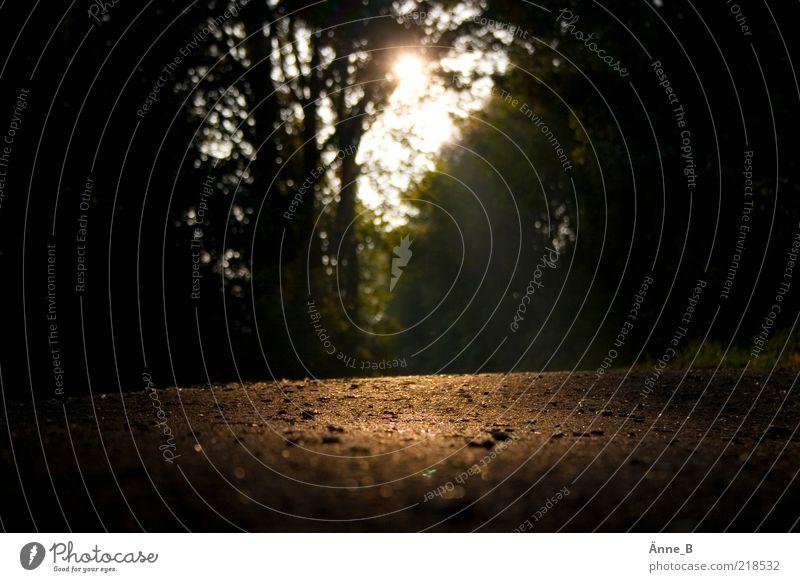 Im Herbst * Natur Sommer ruhig Wald Wege & Pfade gold Fußweg Schönes Wetter Spazierweg Gegenlicht Sonnenaufgang Beleuchtung Lichtblick