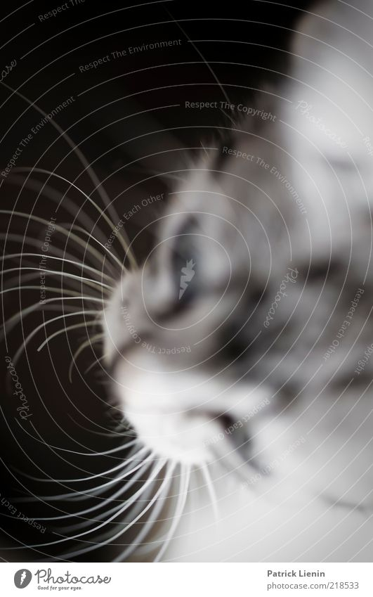 Schnurrhaare Natur schön Tier Kopf grau Katze Stimmung ästhetisch authentisch weich Tiergesicht beobachten natürlich Haustier frech
