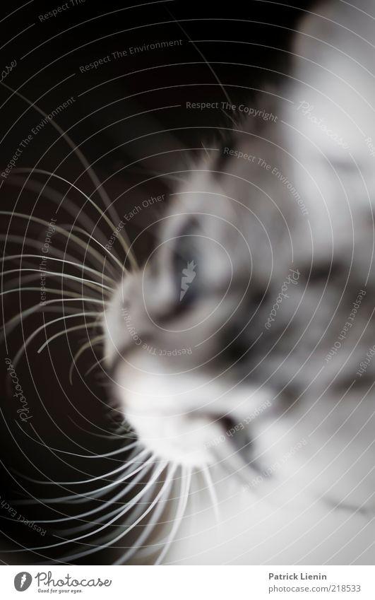 Schnurrhaare Natur Tier Haustier Katze Tiergesicht 1 beobachten Blick ästhetisch authentisch frech schön natürlich weich Stimmung Gedeckte Farben Nahaufnahme