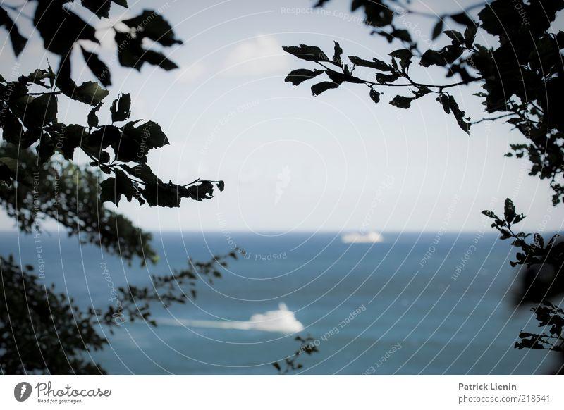 Kreuzfahrt Umwelt Natur Landschaft Urelemente Luft Wasser Himmel Sommer Klima Wetter Schönes Wetter Sträucher Küste Bucht Ostsee Meer Blick Schifffahrt Ausflug