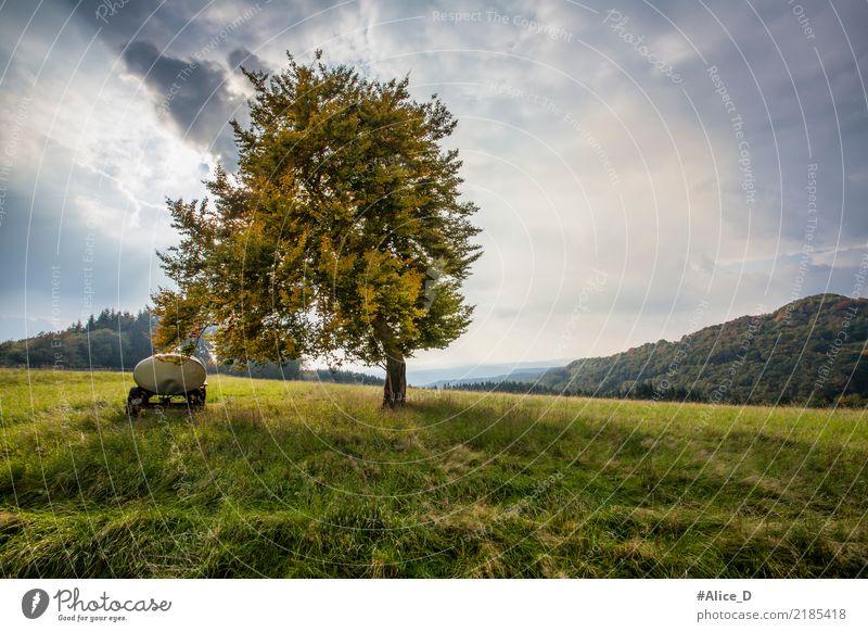 Herbsttage Sommer Natur Landschaft Urelemente Himmel Wolkenloser Himmel Wind Pflanze Baum Gras Wiese Feld Hügel Weide sankt Katharinen Deutschland Europa