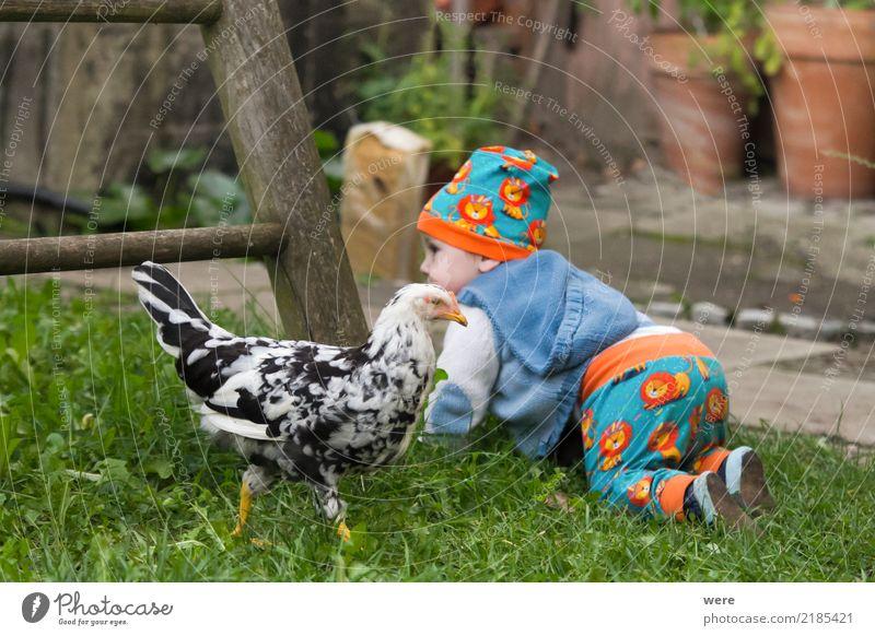 Mit den Hühnern aufstehen Kind Mensch Natur Tier Vogel Baby niedlich Neugier Landwirtschaft Bauernhof Kleinkind Forstwirtschaft Nutztier
