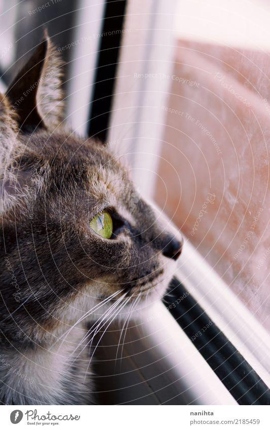 Schöne Katze, die durch ein Fenster schaut Tier Haustier Tiergesicht 1 Glas Kristalle beobachten authentisch einfach frei Neugier niedlich braun grau grün weiß