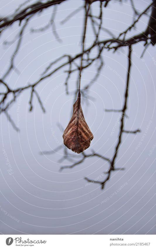 Einsames trockenes Blatt Umwelt Natur Himmel Wolken Herbst Winter Klima Klimawandel Wetter schlechtes Wetter Unwetter Baum alt dunkel authentisch einfach