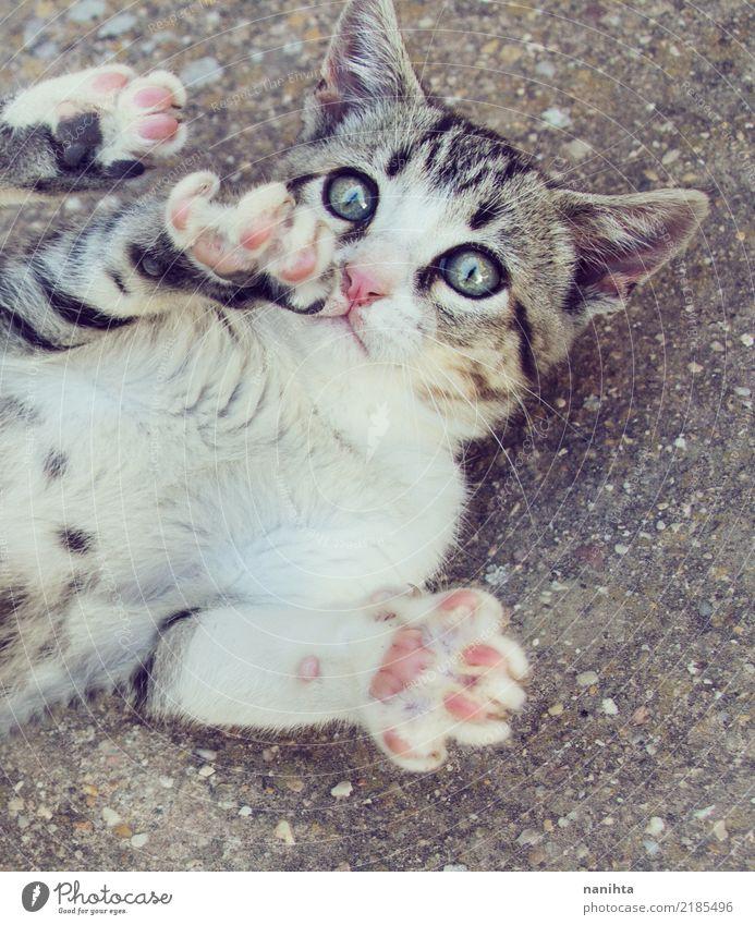 Spielerische Gassenkatze Katze blau schön weiß Tier Tierjunges Leben lustig Spielen Stein grau Stimmung Zufriedenheit frei genießen niedlich