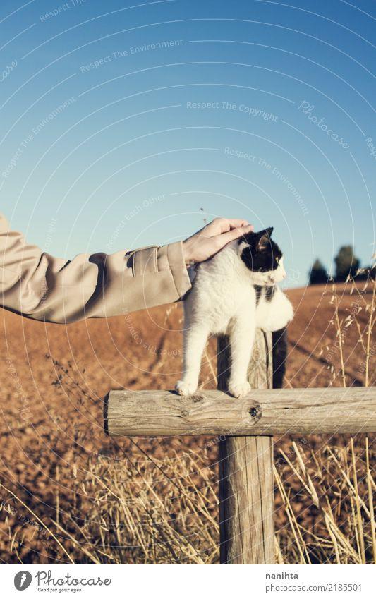 Hand, die eine Katze berührt Mensch Natur Jugendliche Pflanze blau Sommer weiß Landschaft Tier Umwelt Herbst natürlich braun wild
