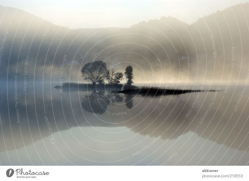 Morgens halb Zehn... Umwelt Natur Pflanze Himmel Herbst Nebel Baum Berge u. Gebirge Küste Seeufer Insel nass natürlich grau weiß Nebelschleier Nebelbank