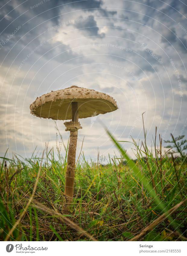 Sonnenschirm Natur Pflanze Tier Himmel Wolken Herbst Wiese Wald entdecken Essen Wachstum fantastisch nah schön blau braun mehrfarbig gelb gold grün orange Pilz