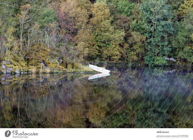 Wasserspielung Natur Pflanze Baum ruhig Wald Umwelt Herbst See natürlich Wasserfahrzeug Idylle Urelemente Seeufer Anlegestelle Ruderboot