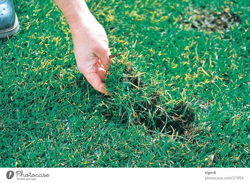 Hand legt Gras Golf Divot