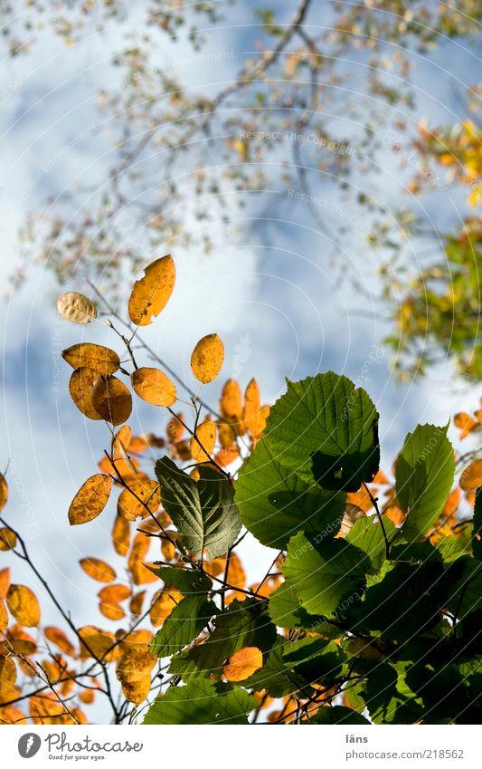 gemischt Natur Himmel Baum Pflanze Blatt Wolken Herbst Umwelt Wandel & Veränderung Vergänglichkeit Schönes Wetter Grünpflanze herbstlich Herbstfärbung