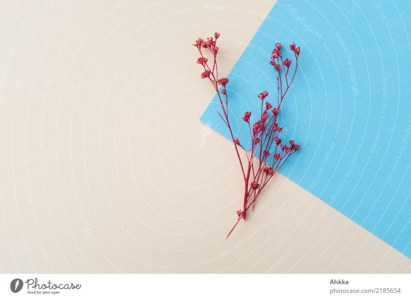 Winterdekoration (1) Dekoration & Verzierung Feste & Feiern Weihnachten & Advent Umwelt Natur Herbst Pflanze Blüte Papier ästhetisch Freundlichkeit Fröhlichkeit
