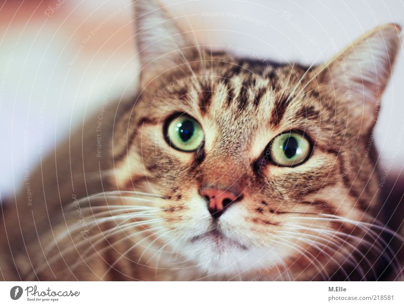 Was tust du da??! Haustier Katze 1 Tier beobachten hören ästhetisch außergewöhnlich kuschlig grün Gefühle klug Neugier Interesse staunen Farbfoto Innenaufnahme
