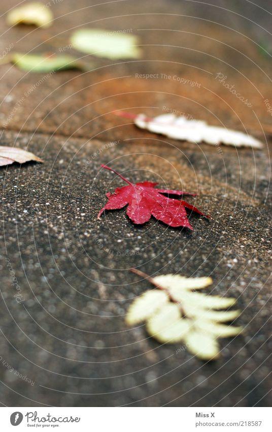 Blätter blau rot Blatt Herbst Beton liegen Vergänglichkeit Bürgersteig Herbstlaub Wege & Pfade herbstlich Herbstfärbung Rutschgefahr