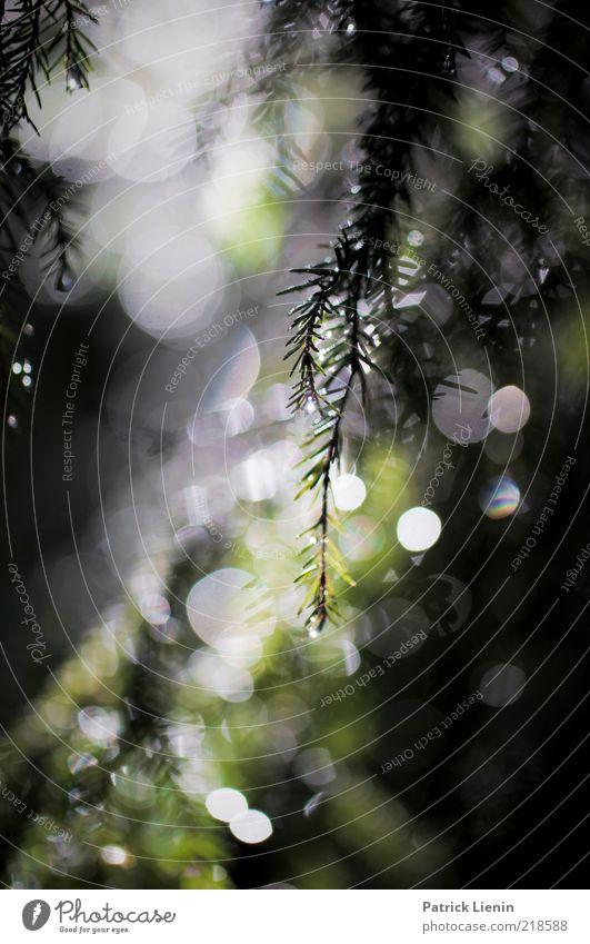 after rain Umwelt Natur Pflanze Urelemente Sommer Klima Wetter Schönes Wetter Regen Blatt Wildpflanze Wald Wachstum frisch glänzend hell Stimmung Zufriedenheit