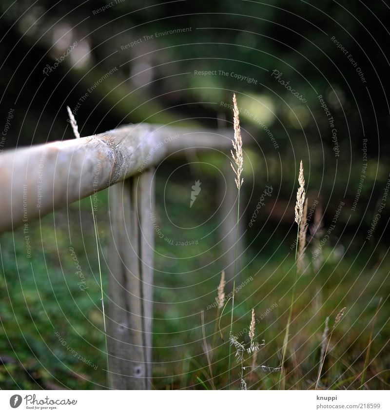 herbstlich-grün Natur alt grün Pflanze schwarz gelb dunkel Herbst Blüte Gras Holz braun Umwelt Wachstum Zaun Barriere
