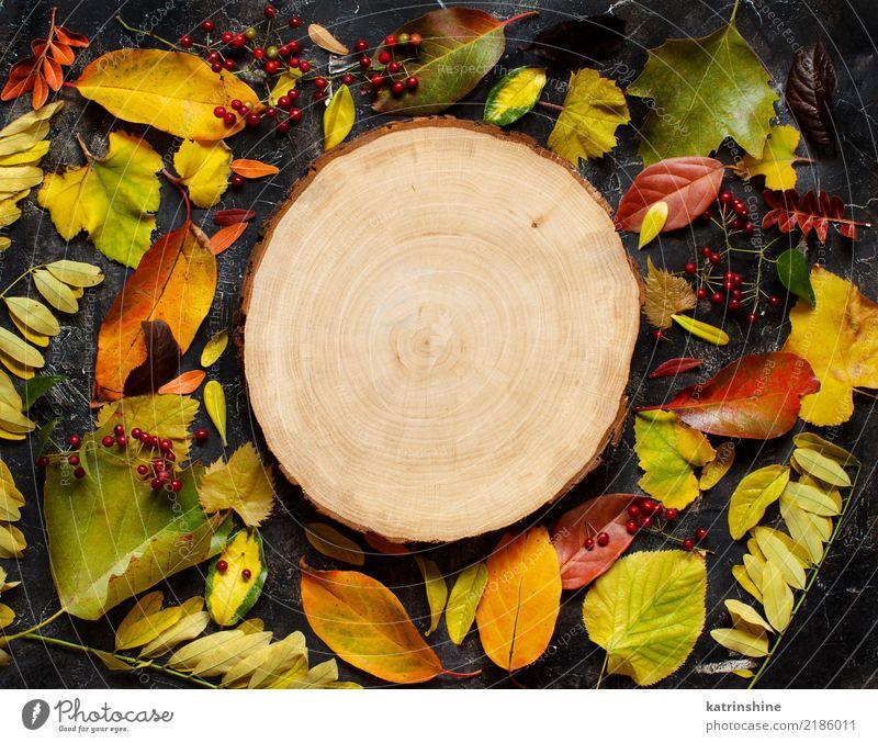 Herbstlaub und Beeren auf einem dunklen Hintergrund Handwerk Blatt Wald Papier Holz dunkel hell braun gelb grün rot Farbe Borte Botanik Ast farbenfroh